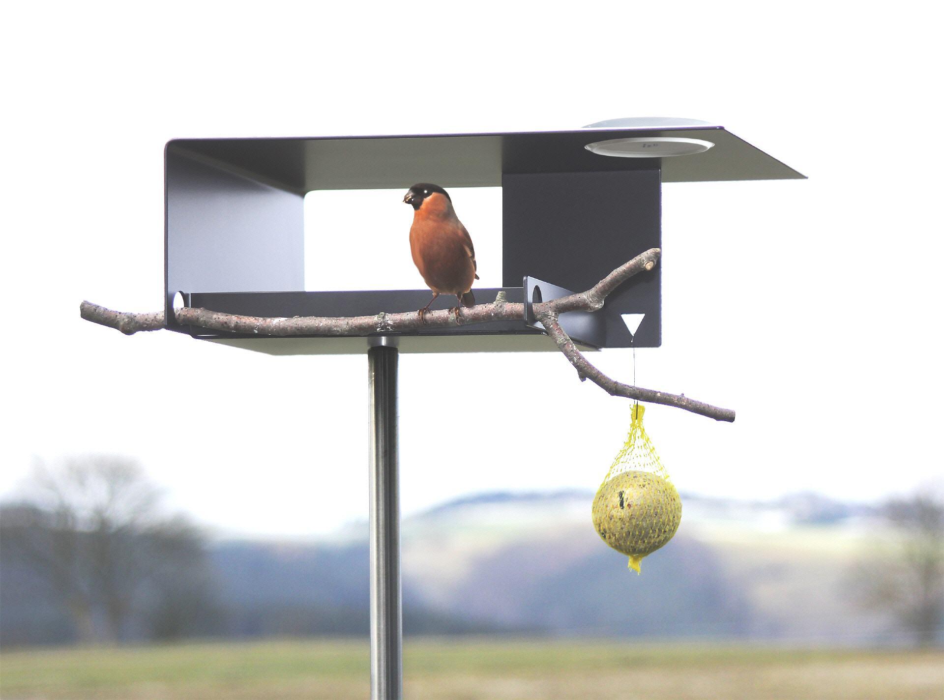 Tolle Hängende Vogeltränke Bilder - Heimat Ideen ...